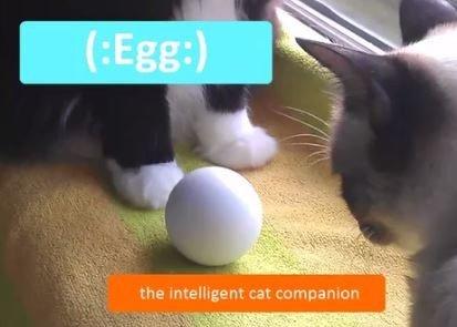 egg cat toy